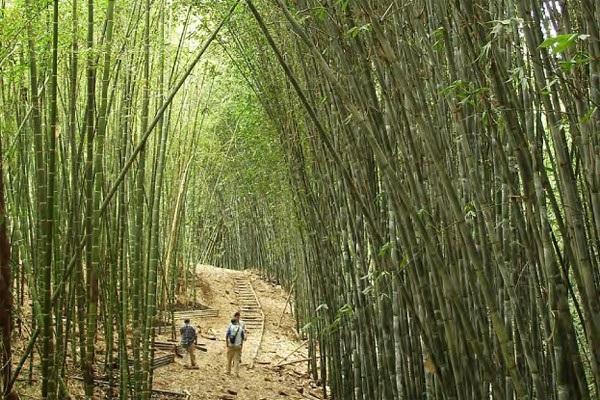K ssadan hisse 39 bambu a ac ndaki hayat dersi - Cultivo del bambu ...